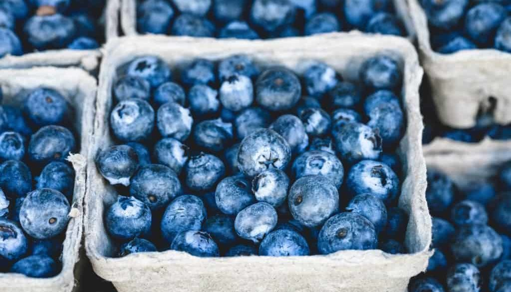 blueberry-1326154_1920 - Copy